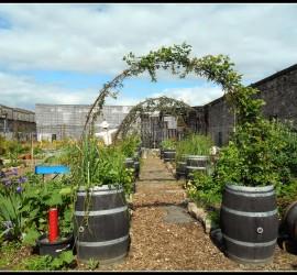 jardin des foudres (10)